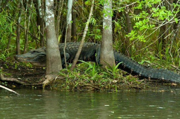 Nomnomz in the Glades...