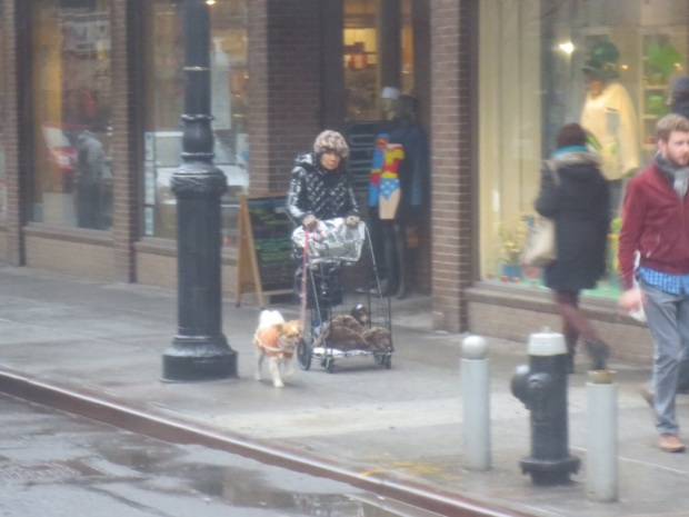 Some crazies yell, others just take all their dogs for a walk... in a cage stroller...