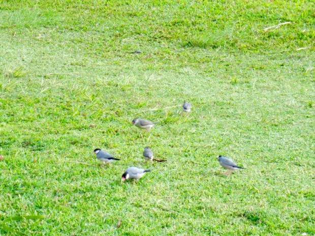 CRUNCHABLE BIRDSESSSSSSS!!!!!