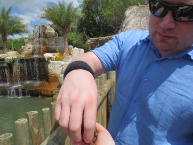 Feeding the turtles...