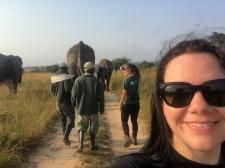 Elephant herding