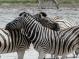 RTW_2017_dag_0039_namibia (04c)__zebra