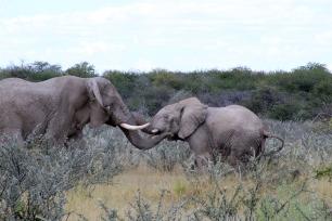 RTW_2017_dag_0039_namibia (04e)2 (1)
