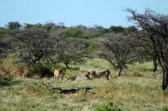 RTW_2017_dag_0040_namibia (7b) (13)