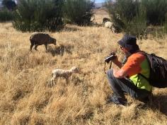 Peter adopting a lamb