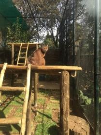 RTW_2017_dag_0106_south_africa_johannesburg_zoo (17)