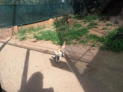 RTW_2017_dag_0106_south_africa_johannesburg_zoo (19)