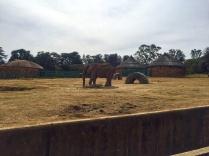 RTW_2017_dag_0106_south_africa_johannesburg_zoo (24)