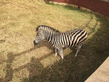 RTW_2017_dag_0106_south_africa_johannesburg_zoo (30)