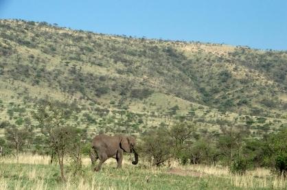 Elephant #646