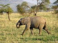 Elephant #389