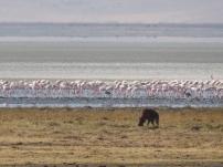 Eat the flamingos!