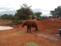 Elephantsssss! <3