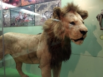 *lol* Such lion. Much scare.
