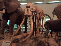 Ahmed the Elephant!