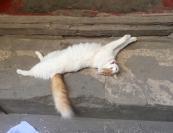 Cats having siesta