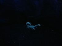 Glow in the dark scorpion... Casual...