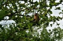 The elusive proboscis <3