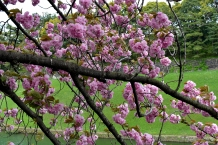 RTW_2018_dag_0406_tokyo_cherry_blossom (28)
