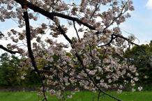 RTW_2018_dag_0406_tokyo_cherry_blossom (29)