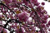 RTW_2018_dag_0406_tokyo_cherry_blossom (37)