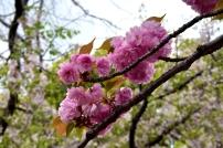 RTW_2018_dag_0406_tokyo_cherry_blossom (38)