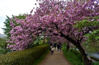 RTW_2018_dag_0406_tokyo_cherry_blossom (50)