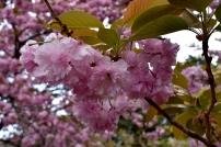 RTW_2018_dag_0406_tokyo_cherry_blossom (54)