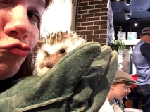 Harry Hedgehog Café