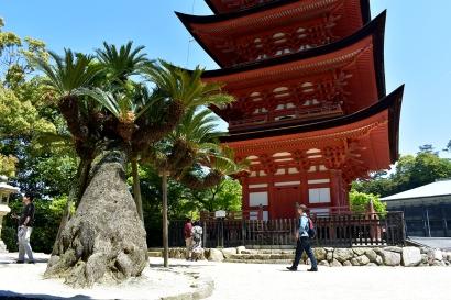 Miyajima's Five Story Pagoda