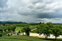 Tea Plantation views