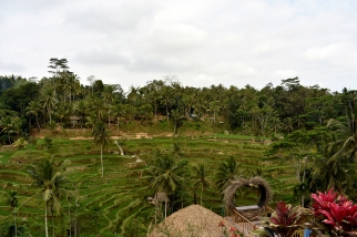 Tegalalang Rice Fields