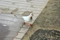Birdy NomNom